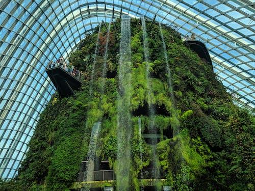 Foto d'estoc gratuïta de a l'aire lliure, arbres, arquitectura, bosc ennuvolat