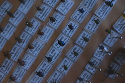 Darmowe zdjęcie z galerii z chrząszcze, kolekcja, owady