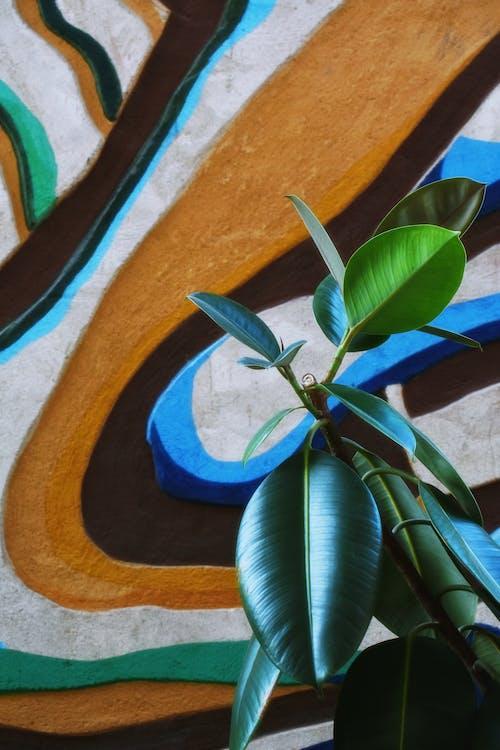 Základová fotografie zdarma na téma barvy, bujný, čerstvý, listy