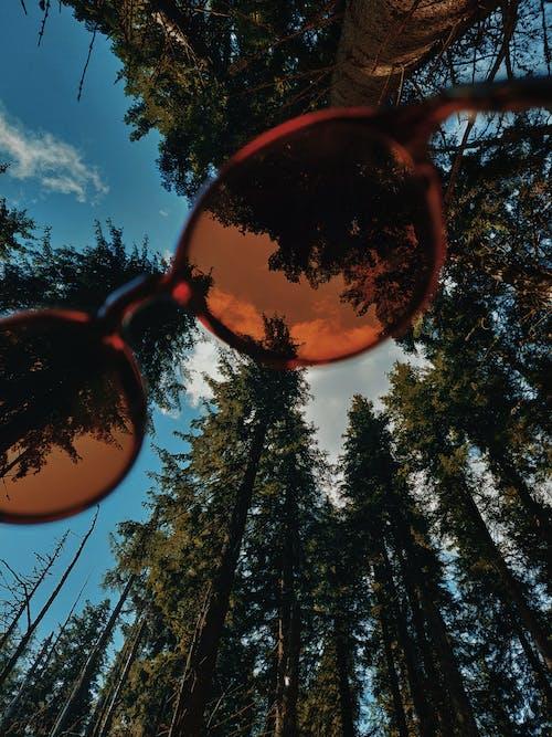 Безкоштовне стокове фото на тему «відтінки, денний час, дерева, жаб'яча перспектива»