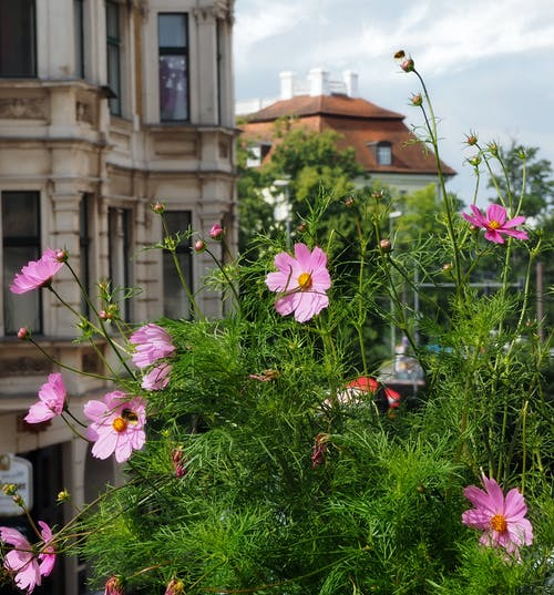 Free stock photo of balcony, plants, summer flower