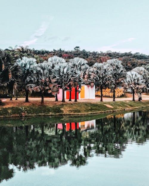 Kostenloses Stock Foto zu bäume, fluss, landschaftlich, natur