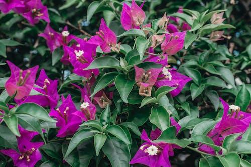 Photos gratuites de couleur verte, feuilles, fleur, fleur pourpre