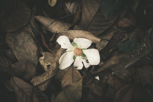 Free stock photo of dark, desktop wallpaper, dry leaves, fall leaves