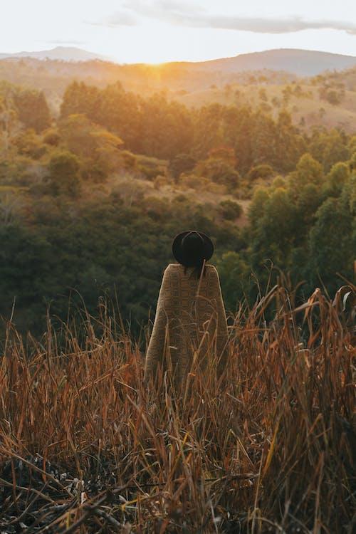alba, alberi, autunno