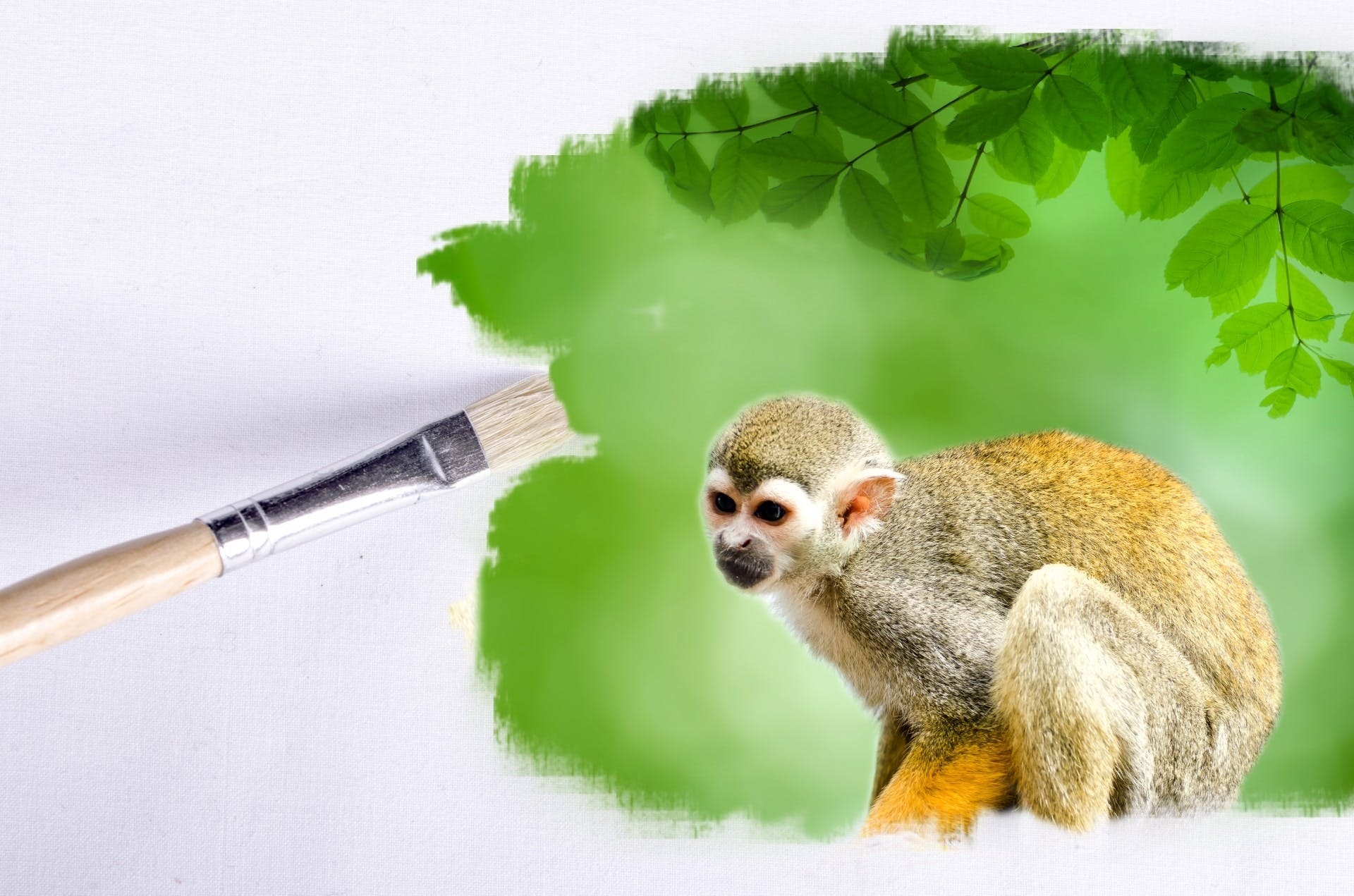 Free stock photo of earth, field, animal, brush