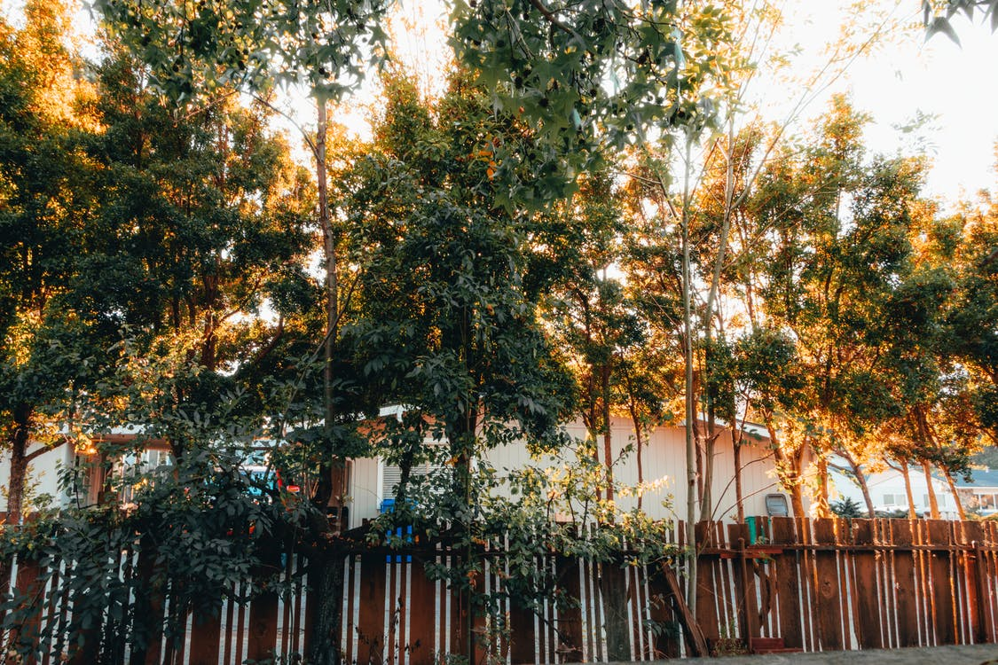 arbres, barrière, clôture