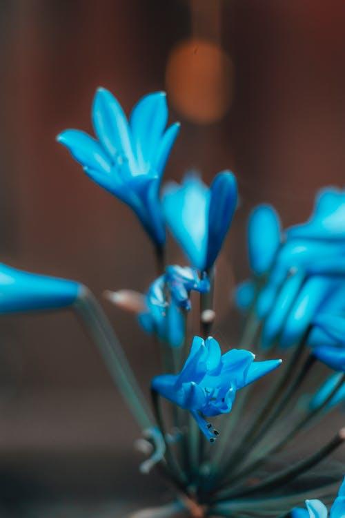 Základová fotografie zdarma na téma bokeh, jasný, květiny, modrá