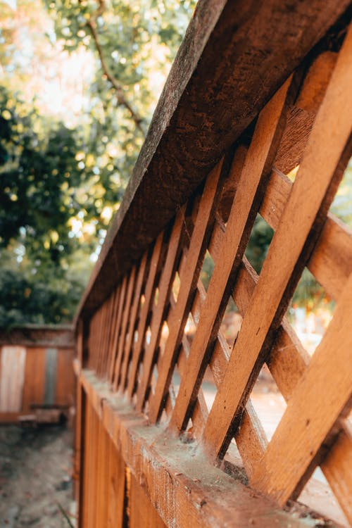 Free stock photo of fence, light, nature, outdoors