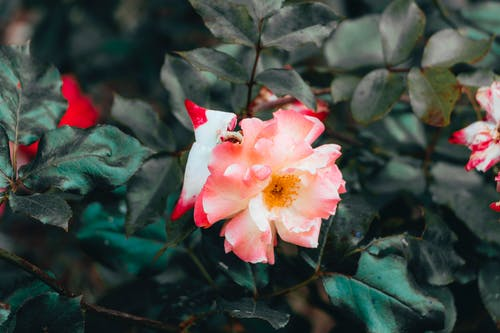 Free stock photo of beautiful, flower, vibes, vsco