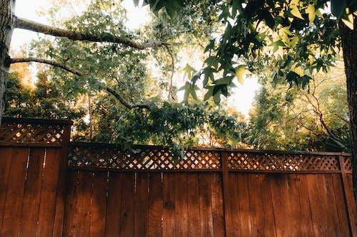 Základová fotografie zdarma na téma krásný, lehký, plot, příroda