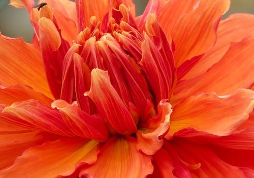 Základová fotografie zdarma na téma barvy, botanický, flóra, jasný