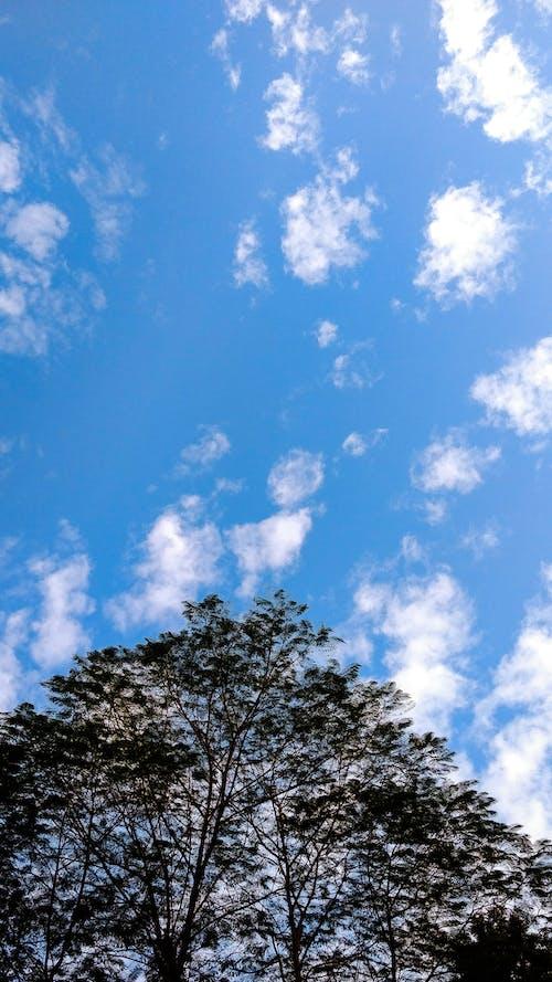 Immagine gratuita di alberi, azzurro, bellissimo, cielo
