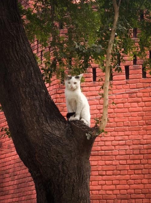 Immagine gratuita di adorabile, albero, animale, animale carino