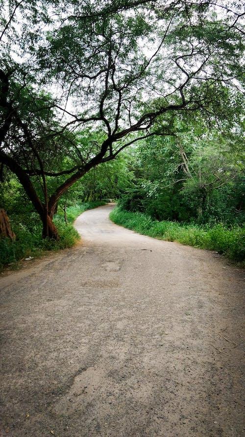 Immagine gratuita di alberi, bellissimo, curva, natura