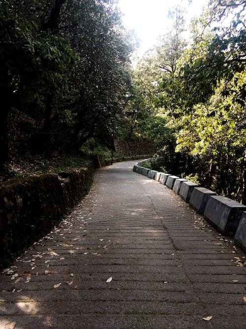 Immagine gratuita di alberi, luce del sole, natura, pietre
