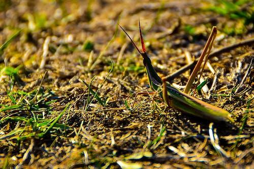 Fotos de stock gratuitas de böcek, otlak, peygamber devesi, yeşil