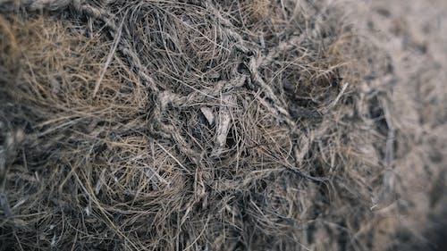 Darmowe zdjęcie z galerii z abstrakcyjny, gniazdo, makro, siatka