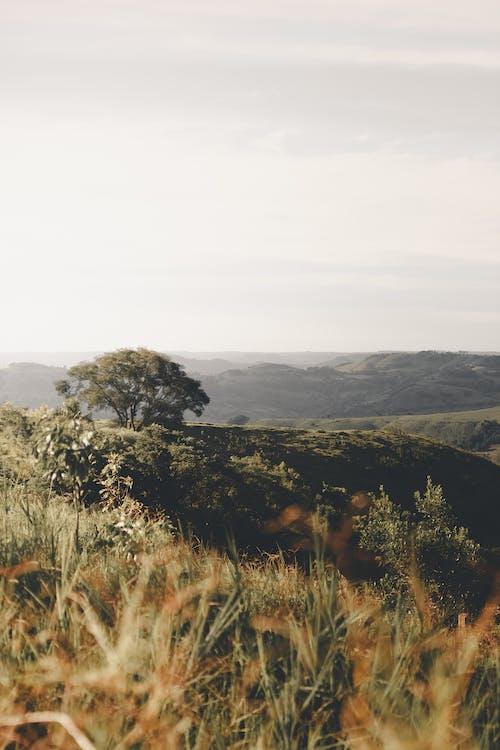 Fotobanka sbezplatnými fotkami na tému árvore, Brazília, krajina, krásna krajina
