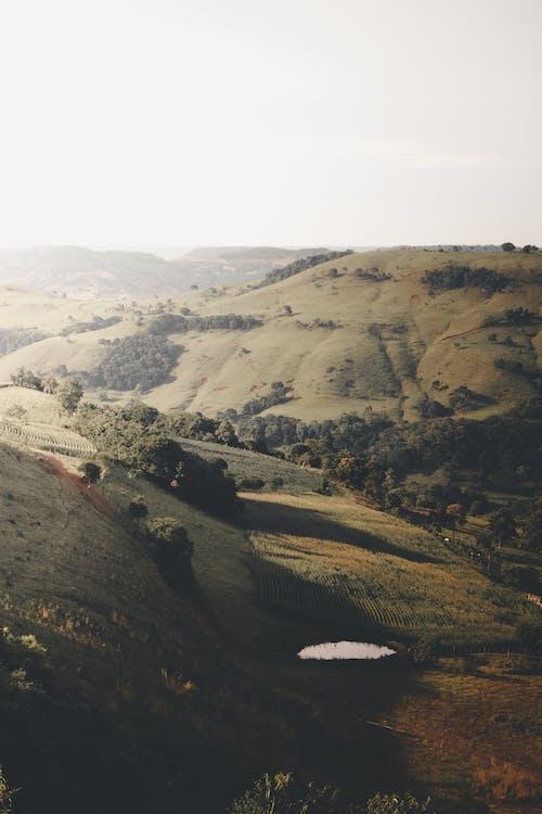 Безкоштовне стокове фото на тему «paisagem, зелене поле, краєвид, сільська місцевість»