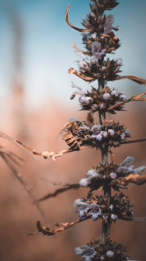 Fotobanka sbezplatnými fotkami na tému abelha, kvet, makro, makrofotografia