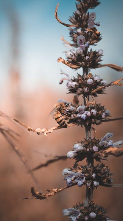 abelha, biene, blume