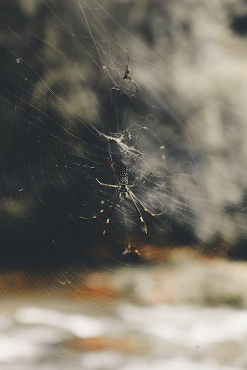 Fotobanka sbezplatnými fotkami na tému aranha, makro, náladový, pavučiny