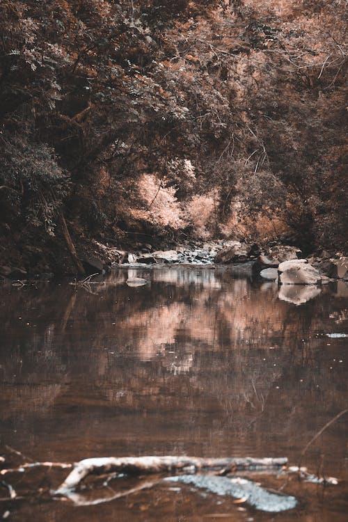 Fotobanka sbezplatnými fotkami na tému príroda, rieka