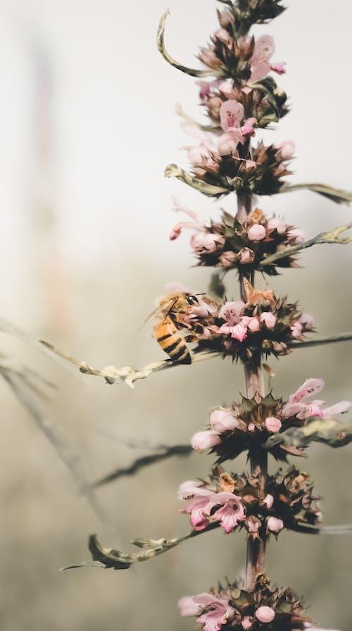 Imagine de stoc gratuită din abelha, albină, floare, fotografie de aproape