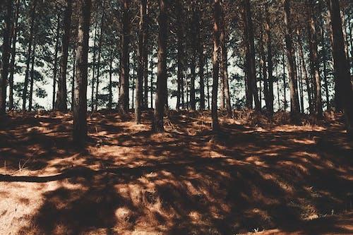 Fotobanka sbezplatnými fotkami na tému árvores, bosque, floresta, krása v prírode