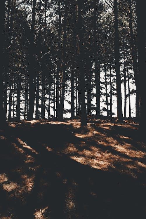 Imagine de stoc gratuită din american verde broasca copac, arbore, árvore, atmosferă sumbră