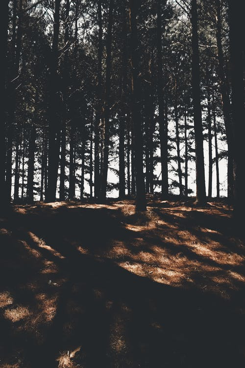 Fotobanka sbezplatnými fotkami na tému americká zelená žabka, árvore, floresta, les