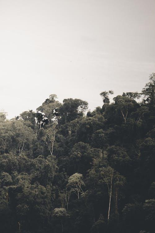 árvores, boom, Bos