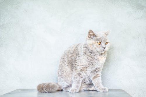 かわいらしい, キティ, ネコ, ネコ科の無料の写真素材