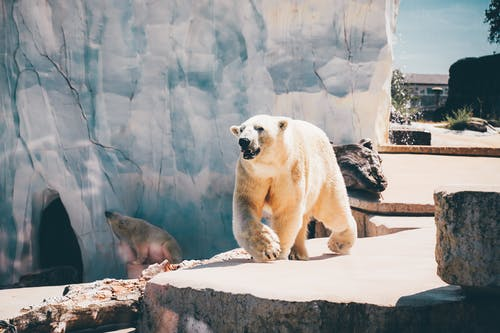 Photo Of Polar Bears During Daytime