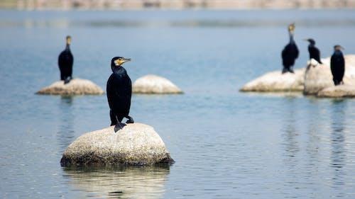 Безкоштовне стокове фото на тему «птах»