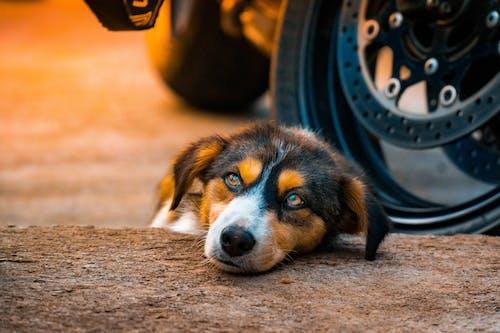Photos gratuites de chien, petit