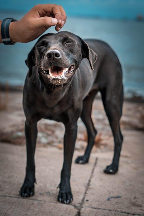 Photos gratuites de chien, content