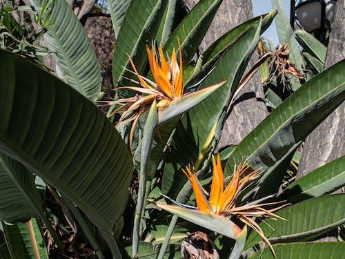 Бесплатное стоковое фото с апельсин, красивый цветок, цветок, цветы