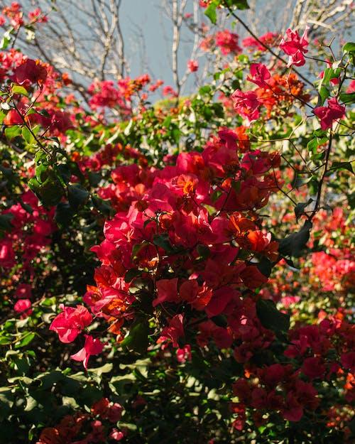 Бесплатное стоковое фото с букет цветов, красивые цветы, цветок, цветочный