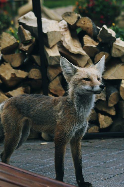 動物, 可愛, 哺乳動物, 天性 的 免费素材照片