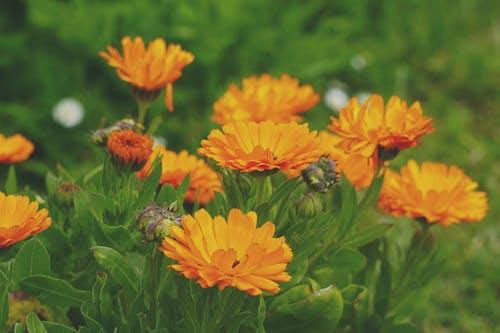 floraison, エテ, ガーベラ, フロールの無料の写真素材