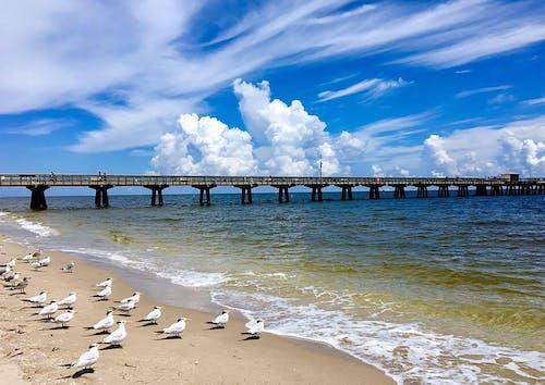 Free stock photo of beach view, blue sky, seagulls