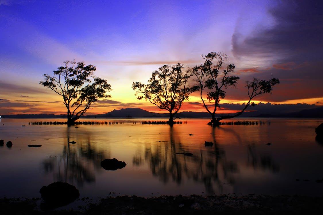 acqua, alba, alberi