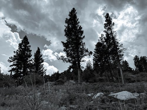 天空, 山, 樹 的 免費圖庫相片