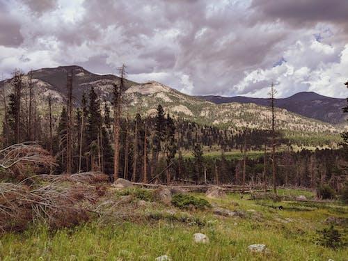 天空, 山, 景觀, 樹 的 免費圖庫相片