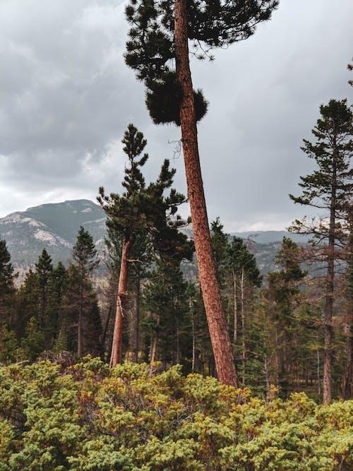 山, 景觀, 樹, 風景 的 免費圖庫相片