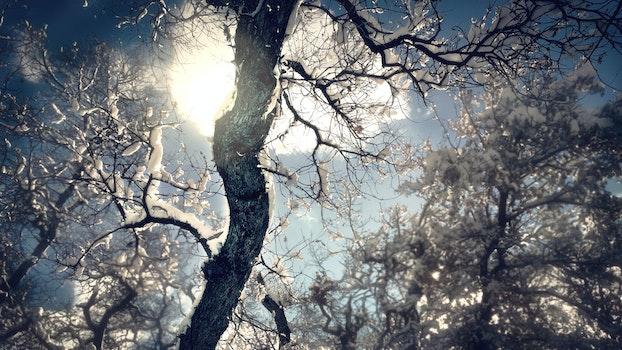 Free stock photo of cold, snow, light, dawn