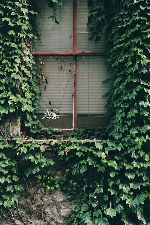 工厂, 廢棄的建築, 樹葉, 百葉窗 的 免费素材照片