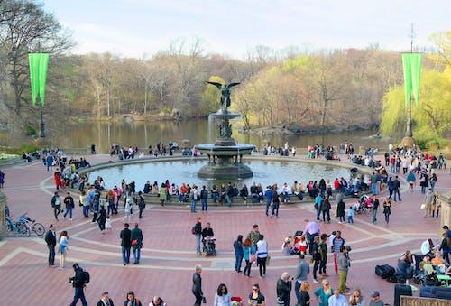 Photos gratuites de arbres, central park, ciel, communauté